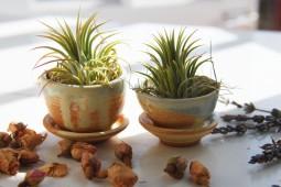 mini planters.