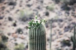 32cactus
