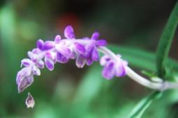 40purpleflower