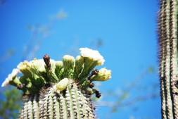 4cactus