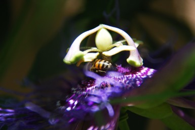 61passionbee