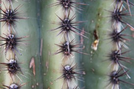 70closecactus
