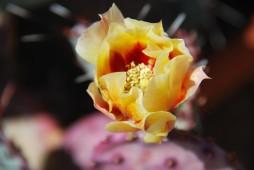 72flower