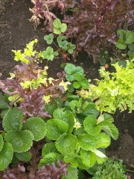 plants - 21