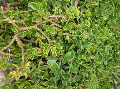 plants - 37