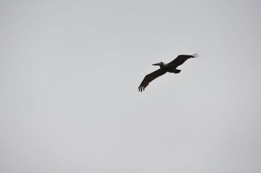 142bird