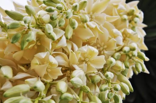159flower